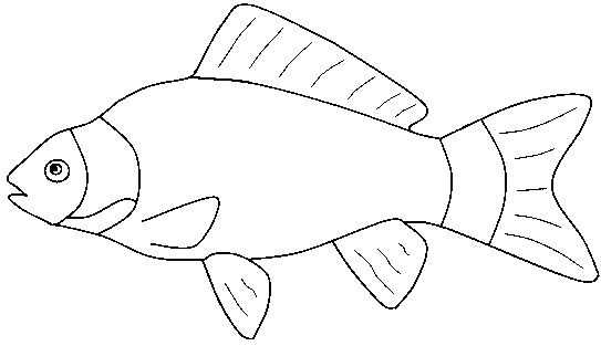 Fish clip art black and white printable saltwater fish outlines
