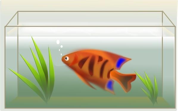 Fish Tank clip art