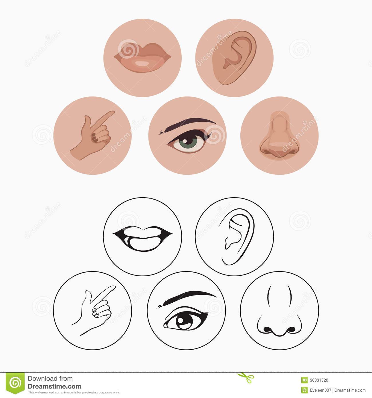 Five Senses,-Five senses,-7