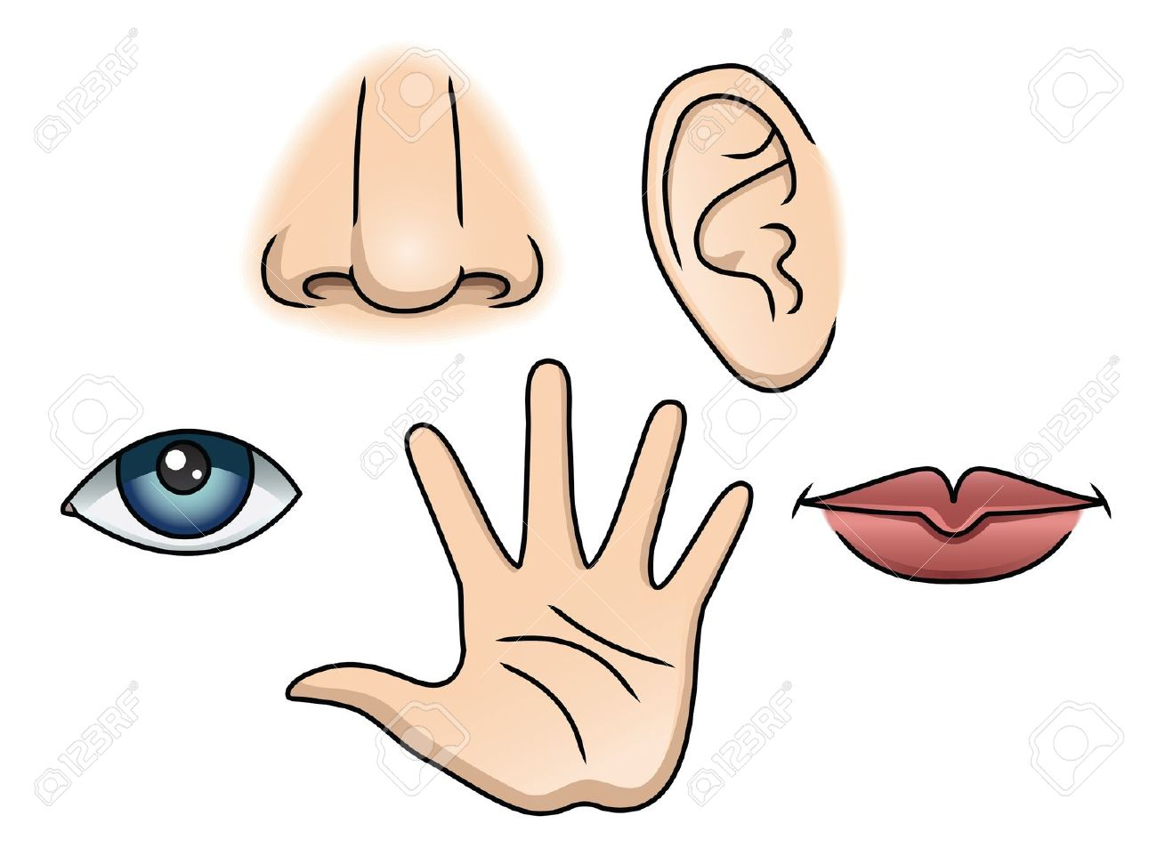 Five Senses Clip Art - .-Five senses clip art - .-8