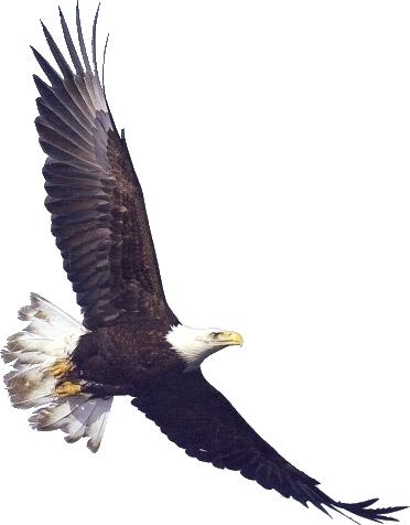 flag eagle clip art .