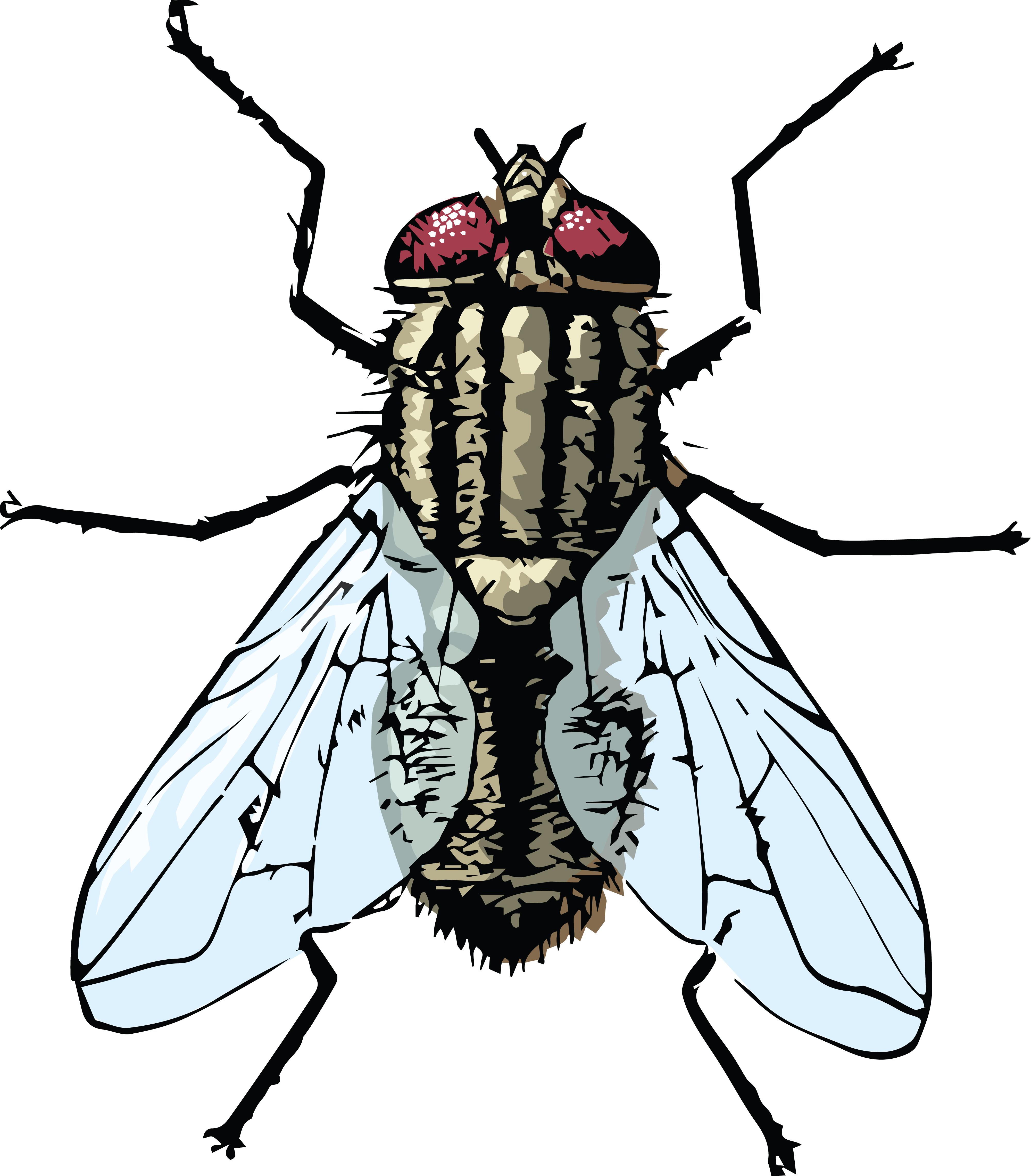 Flies Clipart-Clipartlook.com-4000