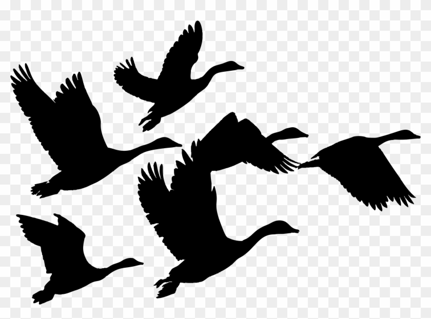 Canada Goose Duck Bird Flock - Geese Flying Clip Art