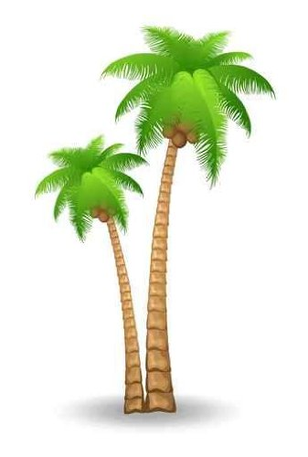 Florida palm tree clipart