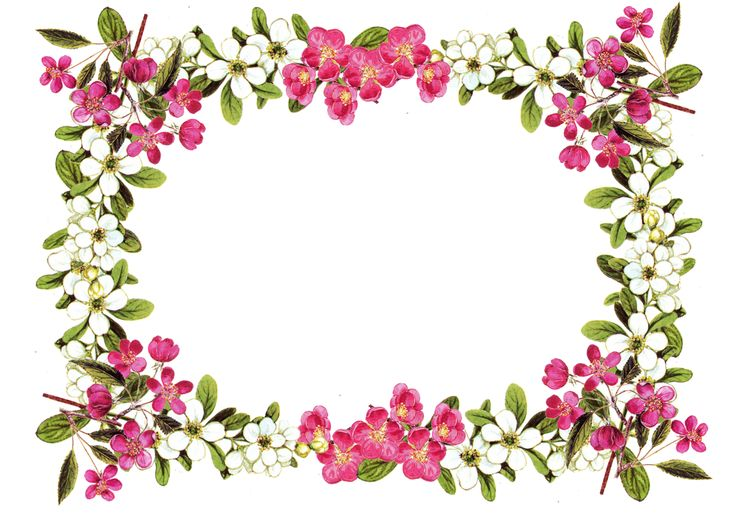42 Flower Border Clipart Clipartlook