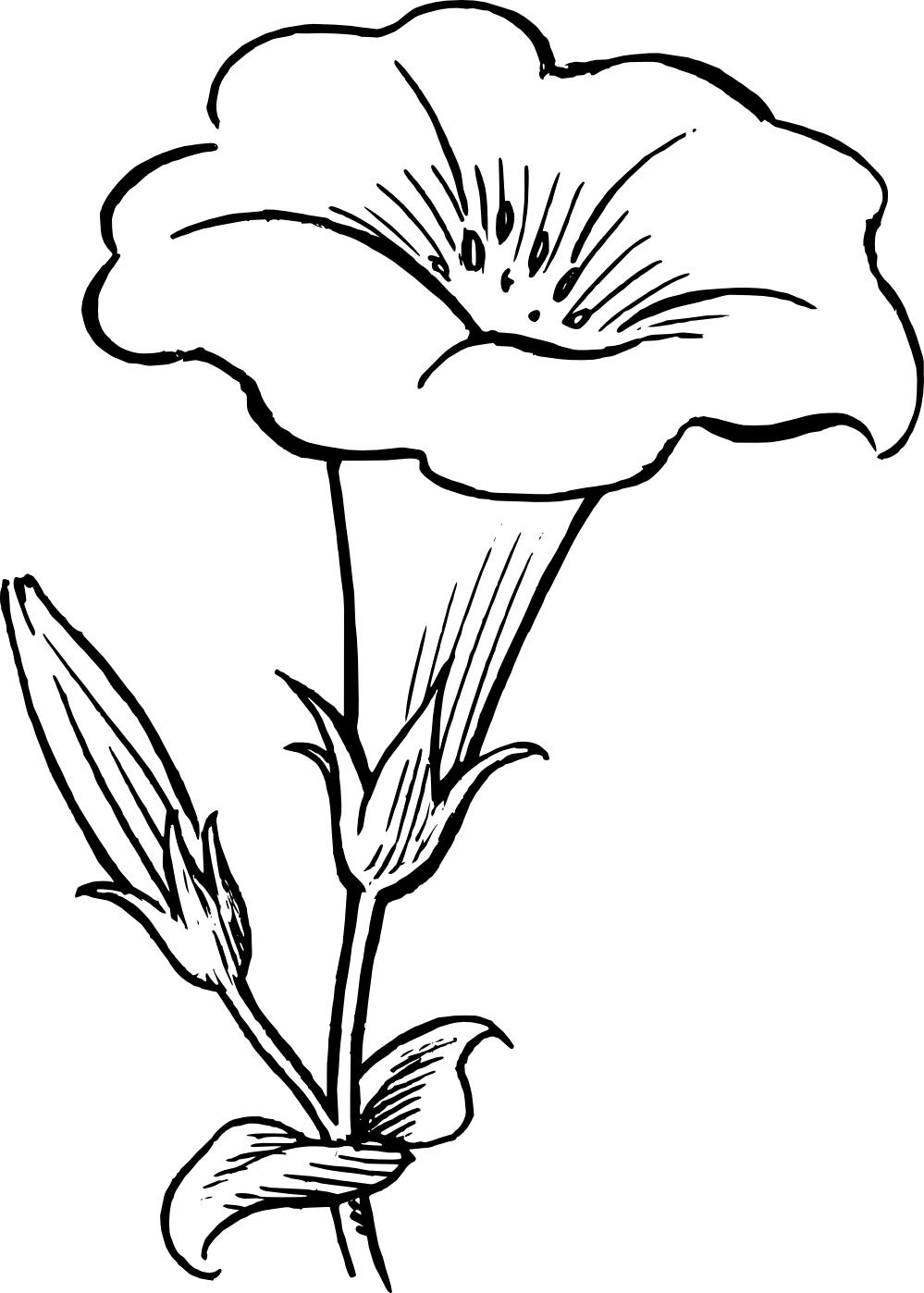 Flower Clipart Images Black And White - clipartsgram clipartall clipartall.com