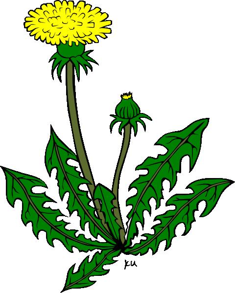 Flower Dandelion Clip Art At Clker Com Vector Clip Art Online