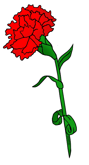 Flower - Red Carnation .