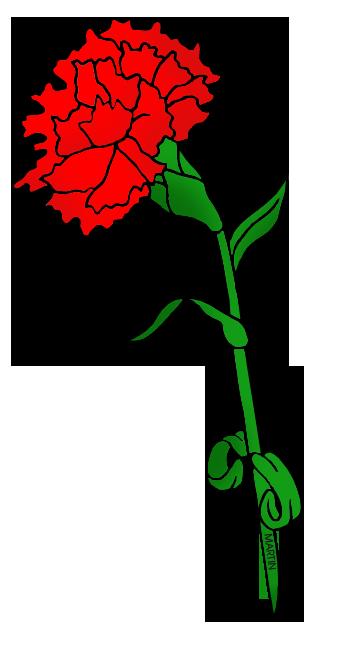 Flower - Red Carnation .-Flower - Red Carnation .-7