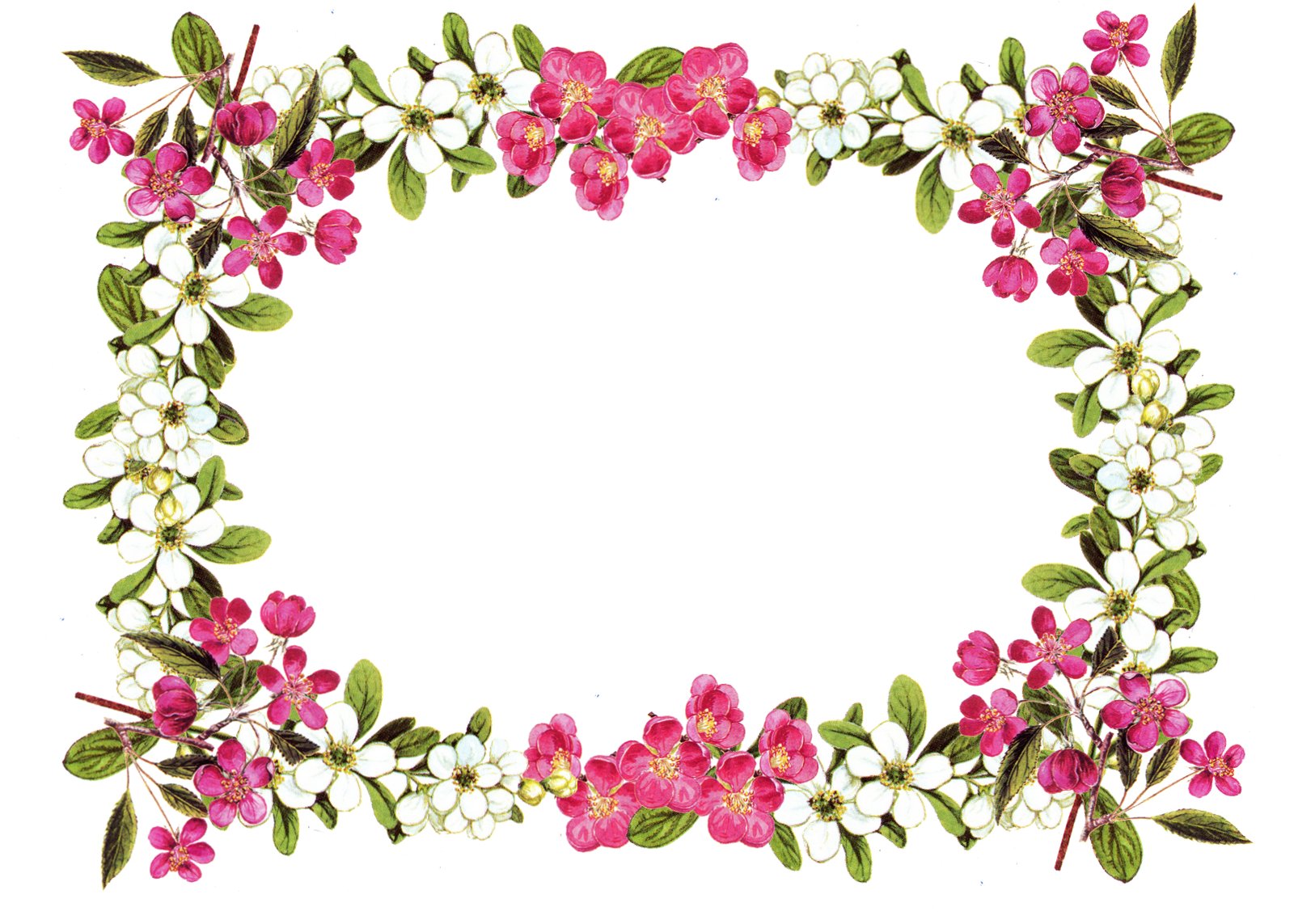 Free Printable Clip Art Borders Free Digital Flower Frame Png - Clipart  Suggest