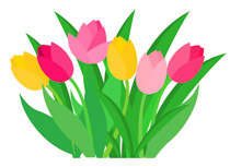 tulips daffodil spring flower in pot clipart. Size: 92 Kb