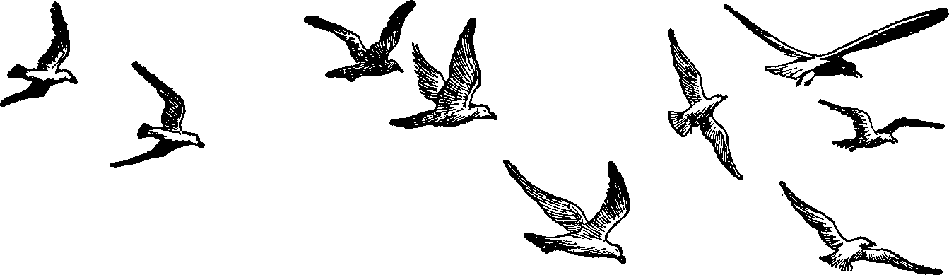 Fly Clipart Black And White. Clipart Bir-Fly Clipart Black And White. Clipart Bird-17