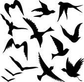 Flying bird; Flying bird silhouettes