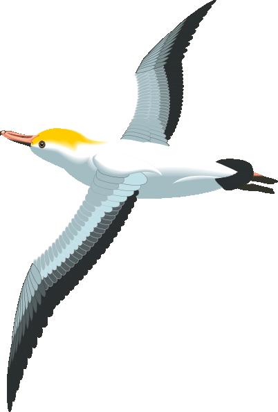Flying Sea Gull Clip Art At Clker Com Vector Clip Art Online