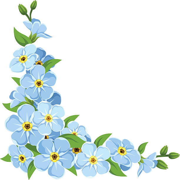 Blue Forget-me-not Flowers. Vector Corne-Blue forget-me-not flowers. Vector corner background. vector art  illustration-1