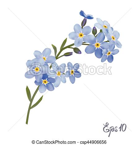 Branch Of Blue Forget-me-not Flowers. - -Branch of blue forget-me-not flowers. - csp44906656-4