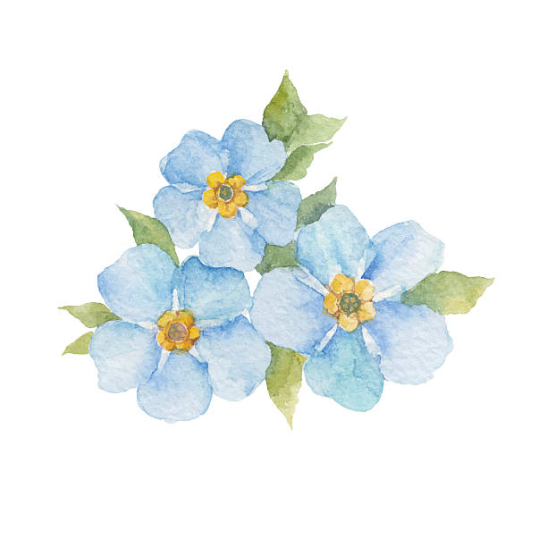 Forget-me-not Flowers Isolated On White -Forget-me-not flowers isolated on white background. vector art illustration-14