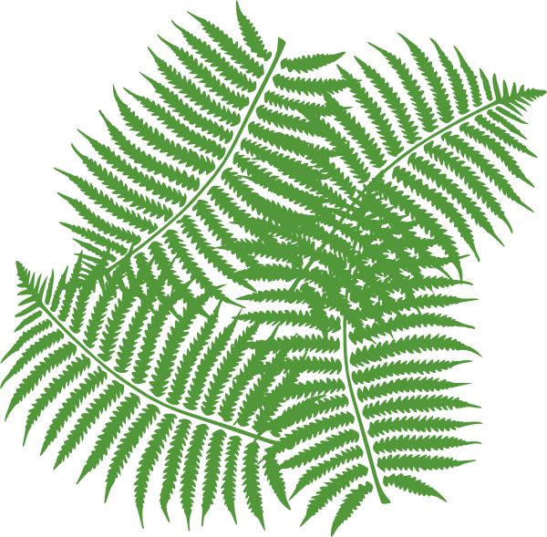 Four Fern Leaves Clip Art At Clker Com V-Four Fern Leaves Clip Art At Clker Com Vector Clip Art Online-12