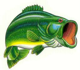 Free Bass Fish Clipart