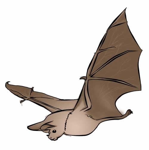 Free Bat Clip Art 17 (2)-Free Bat Clip Art 17 (2)-14
