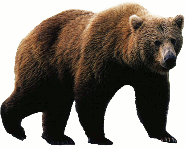 Free bear clipart clip art .