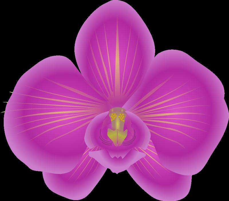 Free Beautiful Orchid Flower Clip Art