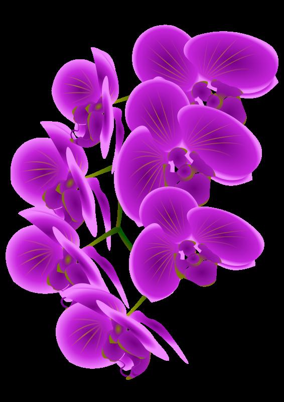 Free Beautiful Purple Orchid Flower Clip Art