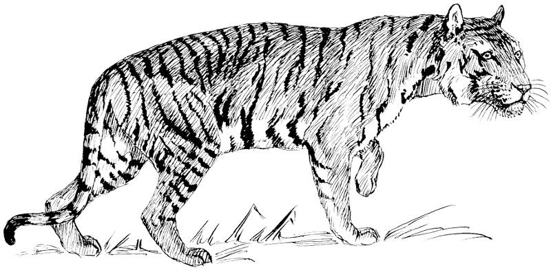 Free Black And White Tiger Clipart-Free Black and White Tiger Clipart-5