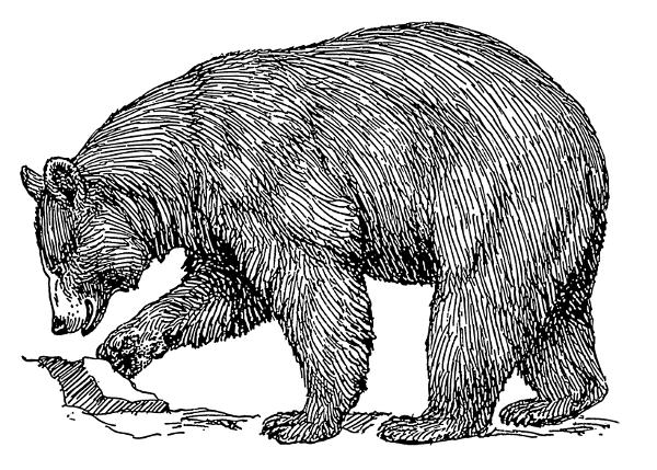 Free Black Bear Clipart