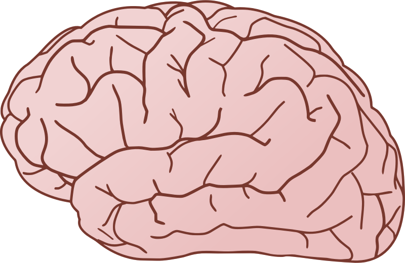 Free Brain Clip Art