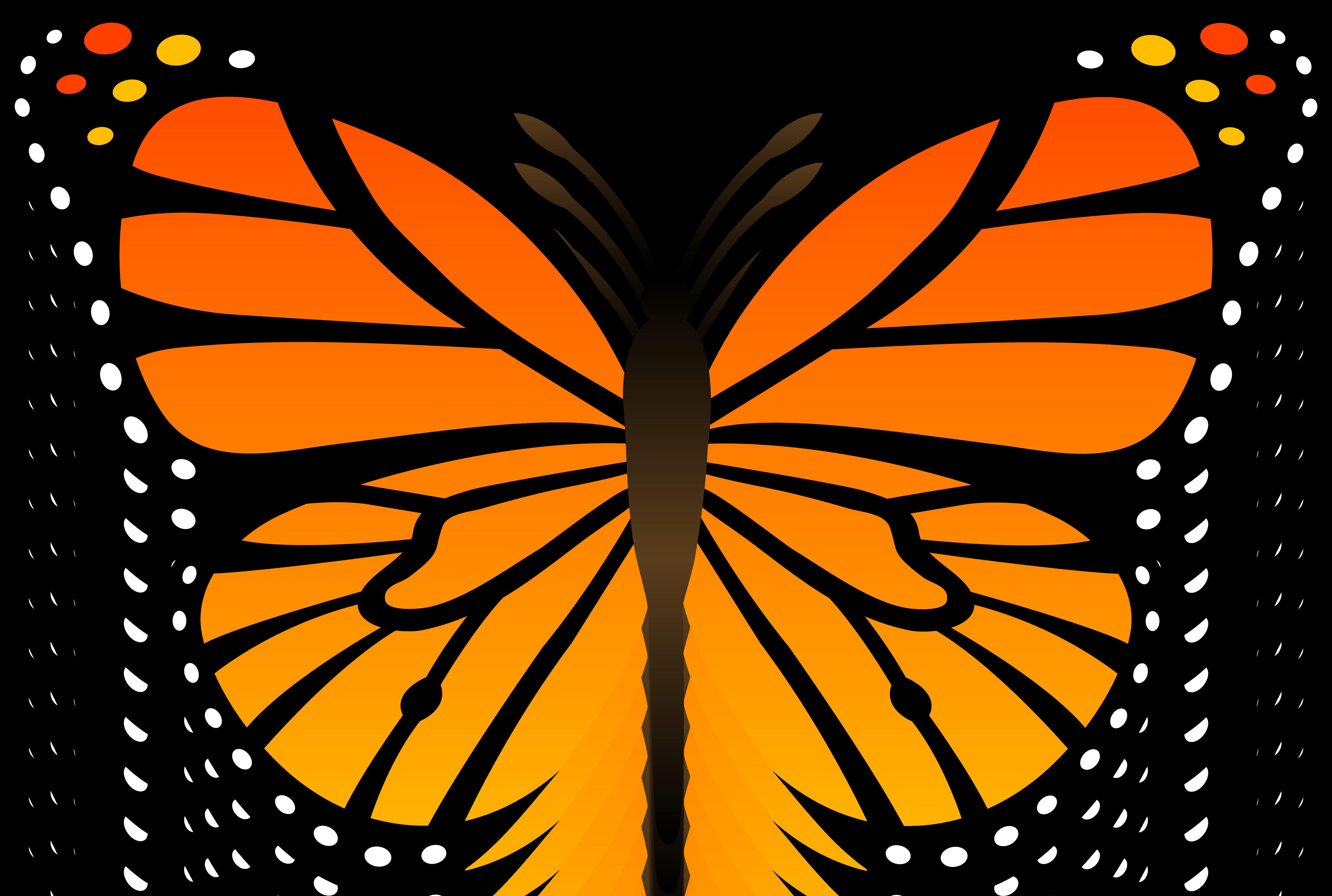 FREE Butterfly Clip Art 16. Butterfly Ca-FREE Butterfly Clip Art 16. Butterfly Cartoon Pictures-15