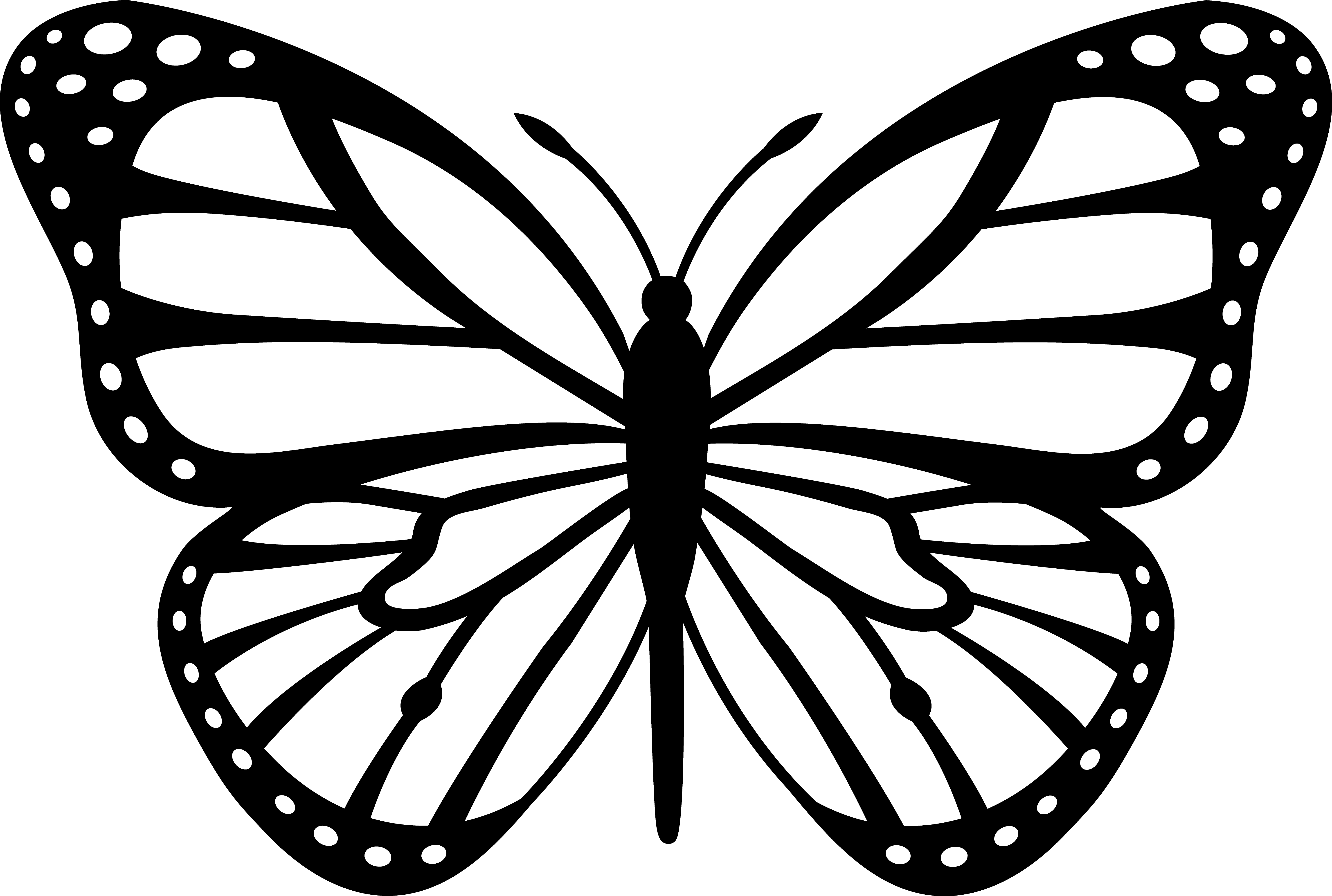 free butterfly clipart u0026middot; white clipart