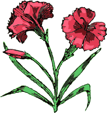 Free Carnation Clipart - Carnation Clip Art