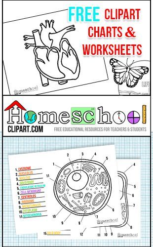 Free Clipart, Charts u0026amp; Worksheets at http://HomeschoolClipart clipartall.com Perfect for