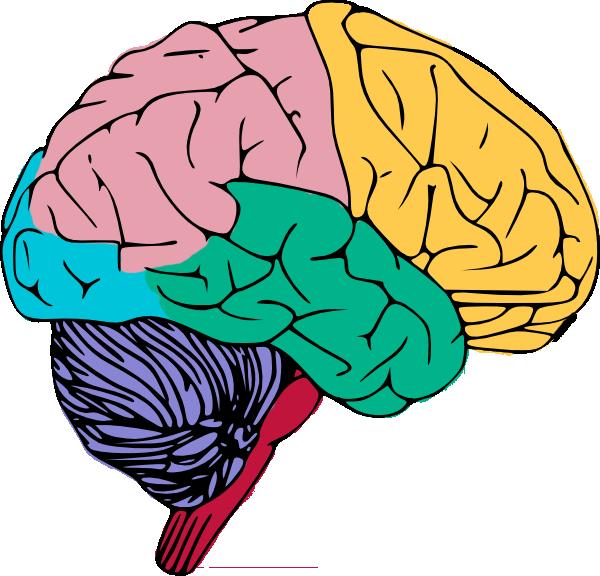 Free Colorful Brain Clip Art