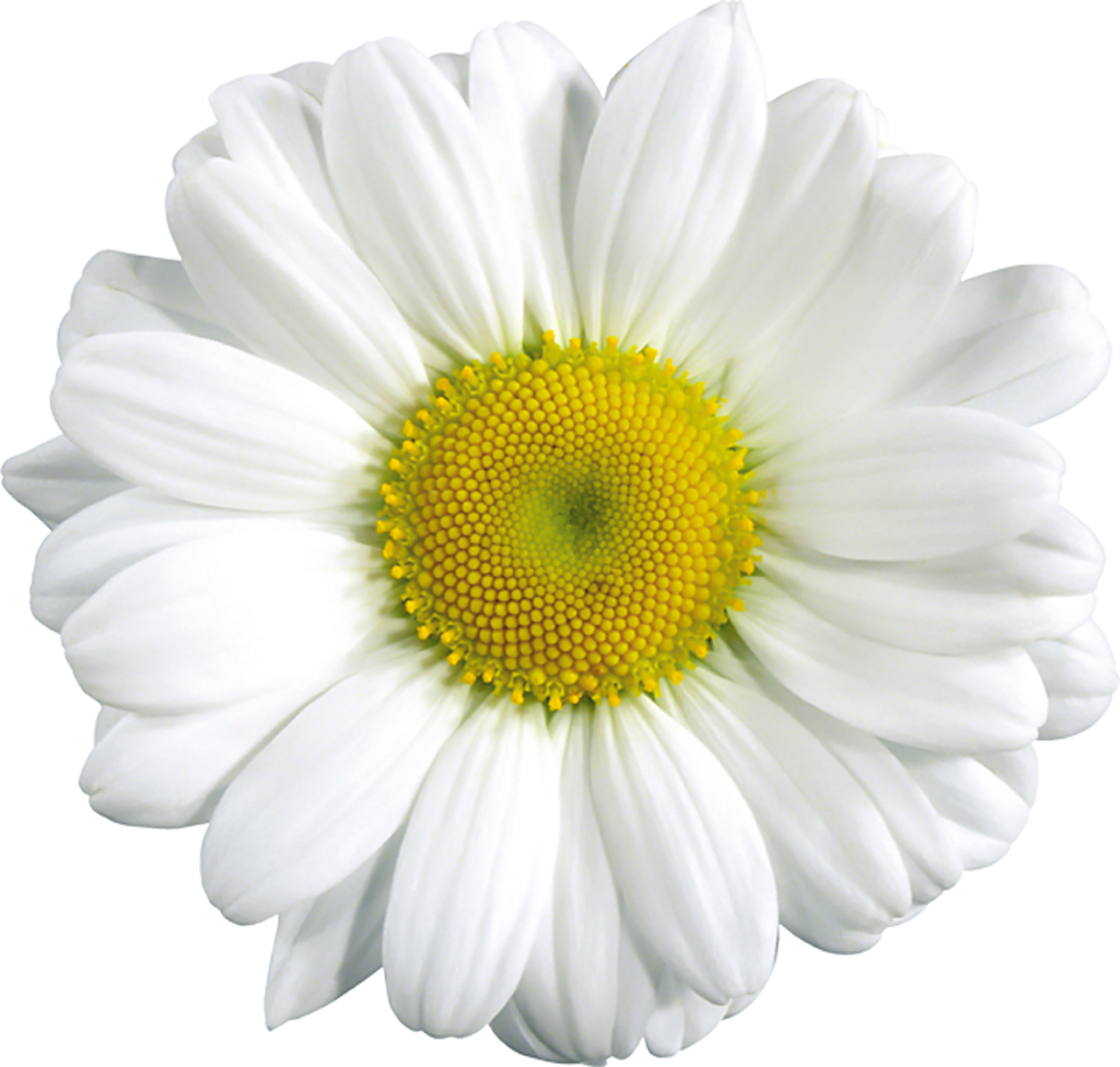 Free daisy clipart public domain flower clip art images and image