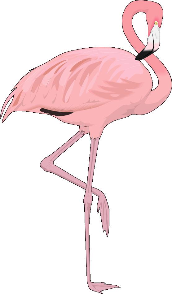 Free Flamingo Clip Art · flamingo4