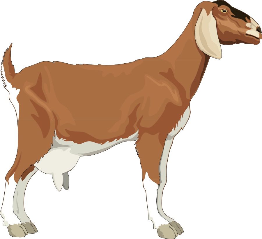 Free Goat Clipart Pictures