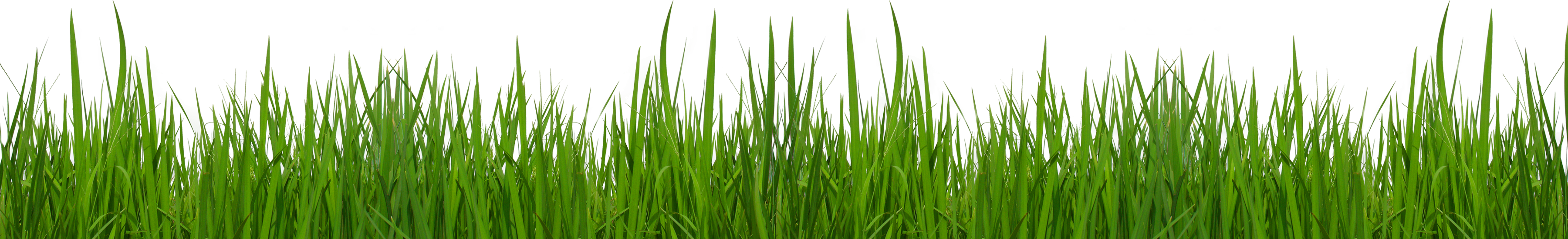 Free Grass Clip Art Pictures-Free grass clip art pictures-2