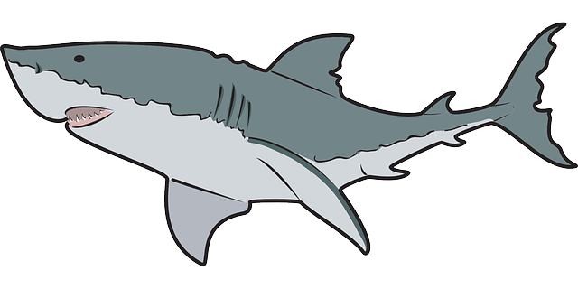 Free Great White Shark Clip Art