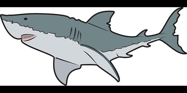 Free Great White Shark Clip Art-Free Great White Shark Clip Art-2