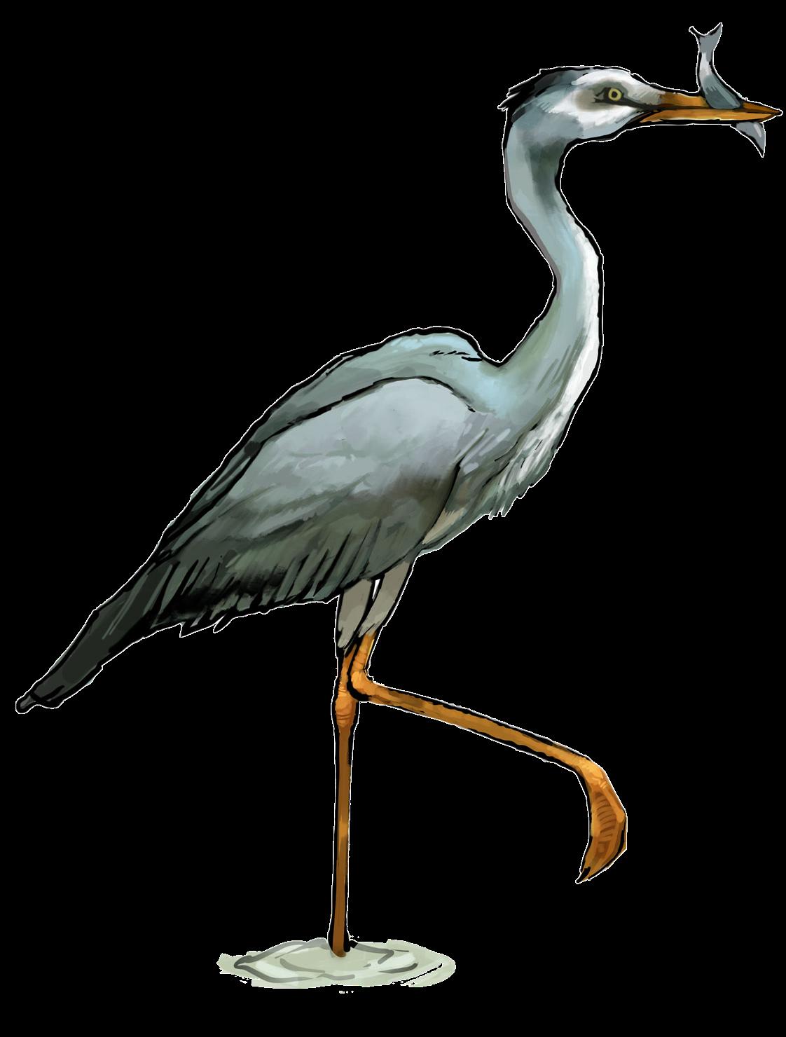 Free Heron Clip Art