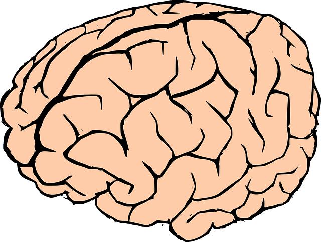 Free Human Brain Clip Art - Clipart Of Brain