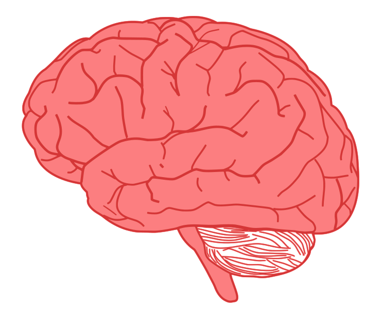 Free Human Brain Clip Art - Clipart Of Brain