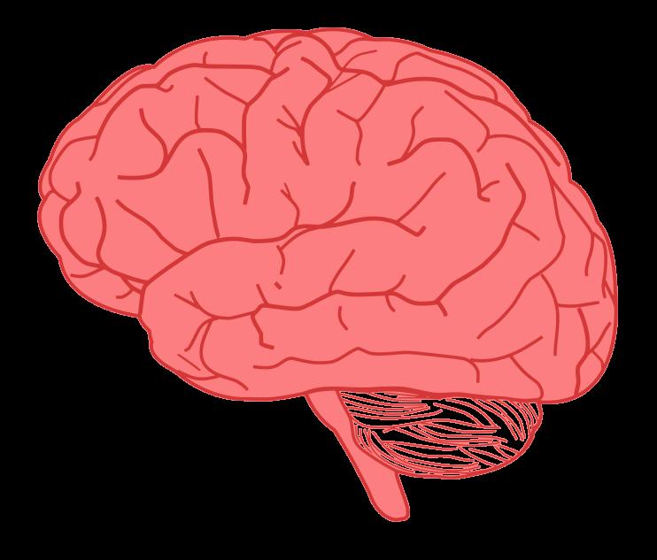 Free Human Brain Clip Art-Free Human Brain Clip Art-11