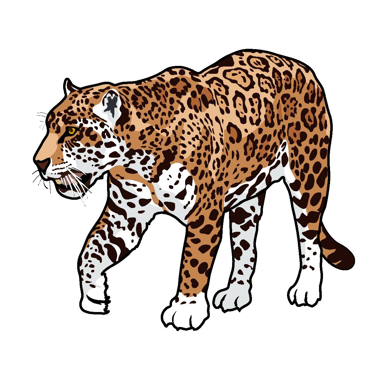 Free jaguar clip art big cat clipart ima-Free jaguar clip art big cat clipart image-5