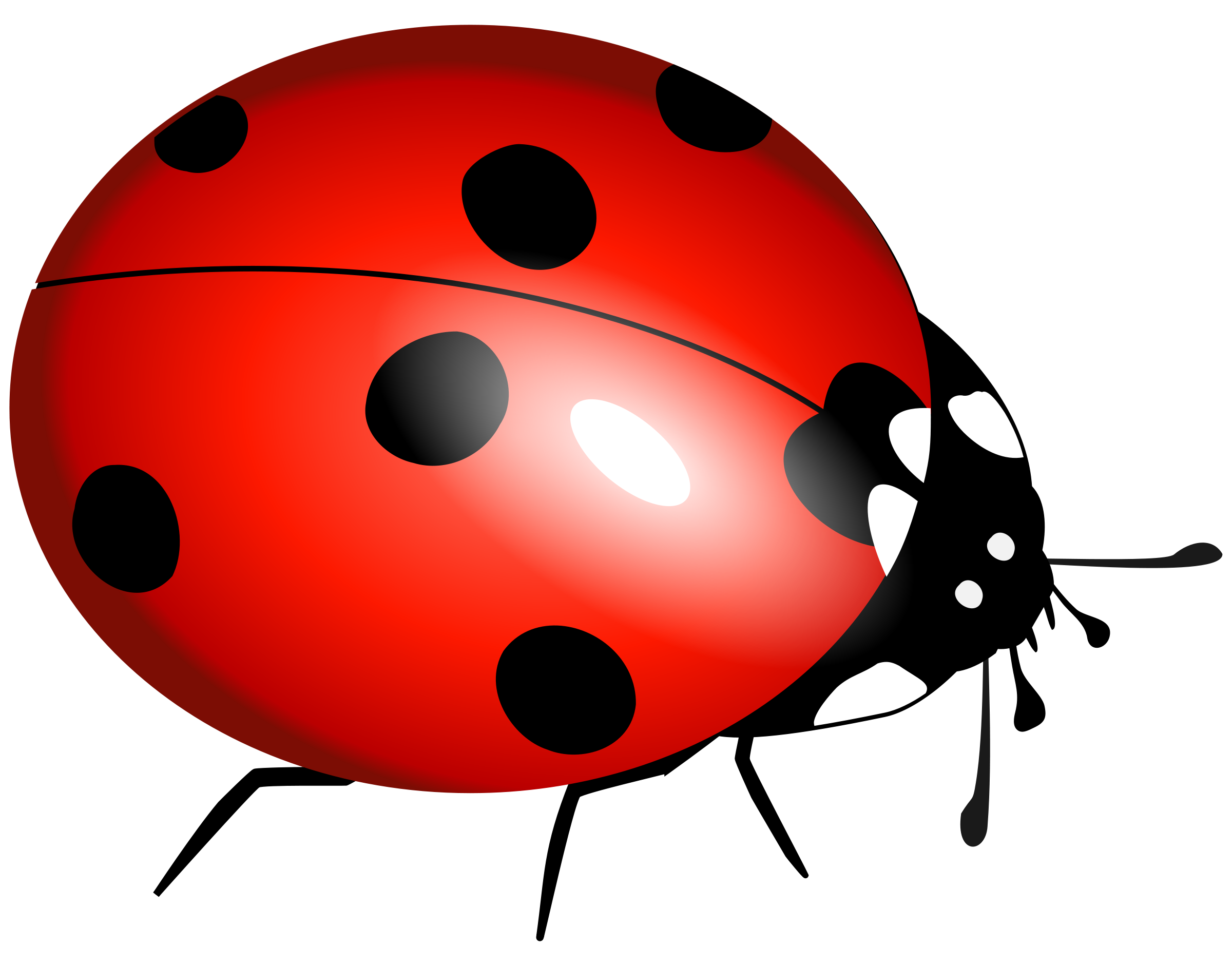 Free lady bug clipart illustration