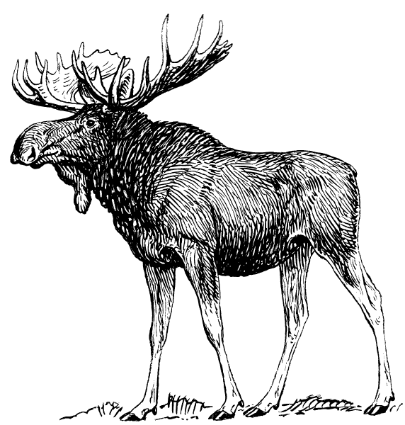 Free Moose Clipart