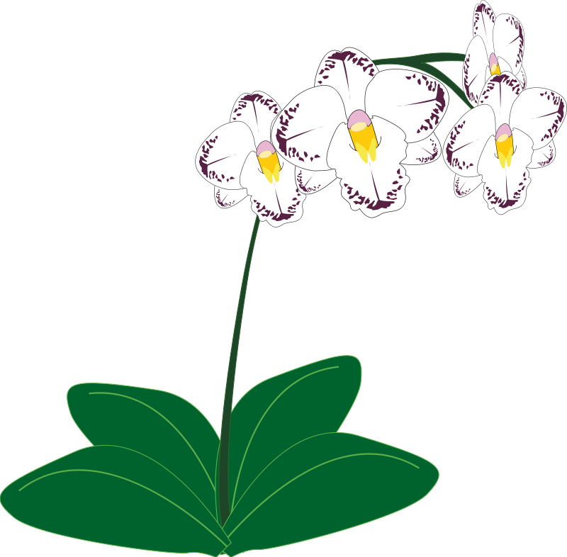Free Orchid Clip Art u0026middot; orchid