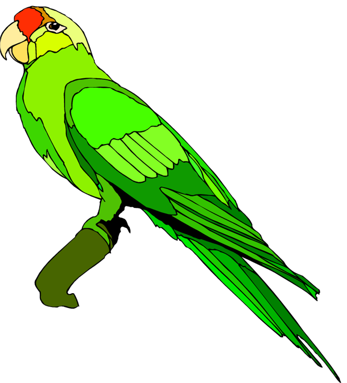 Free Parrot And Macaw Clipart-Free Parrot And Macaw Clipart-5